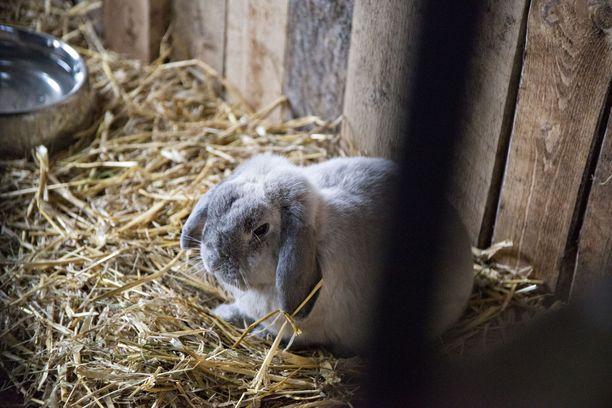 Yli 220 kania lopetettiin. Tapaus johti laajaan rikostutkintaan. Kuvituskuva ei liity juttuun.