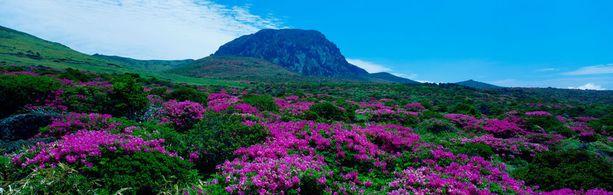 Jejun luonto on kaunista.