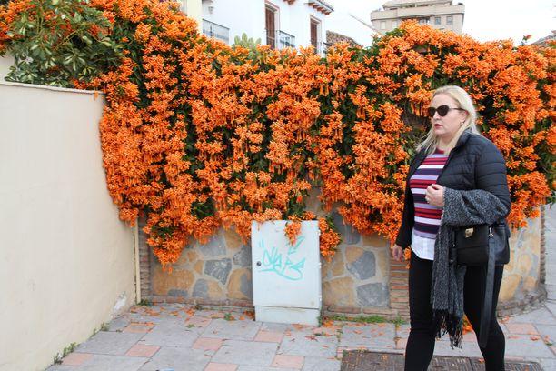 Vaikka on keskitalvi, kukkaloisto piristää Anna Anorhin parinkymmen minuutin työmatkaa Los Bolichen kodista Fuengirolan keskustaan Baronan toimitaloon.