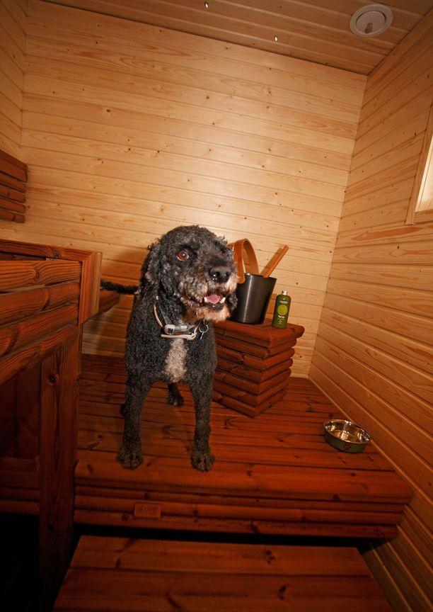 KOHDE 36. Koska perheen koirat pitävät saunomisesta, saunan lauteet tehtiin niin, että koirille löytyy löylyttelyyn oma mukava tasanne.