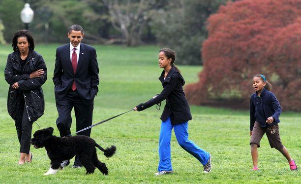 """""""Ensimmäinen koira"""" Bo muutti Valkoiseen taloon vuonna 2009."""
