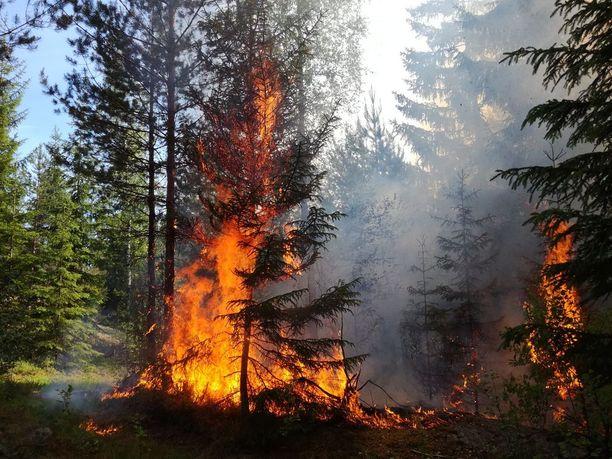 Enimmäkseen palo tuhosi aluskasvillisuutta, mutta liekit nuolivat myös suurempia puita.