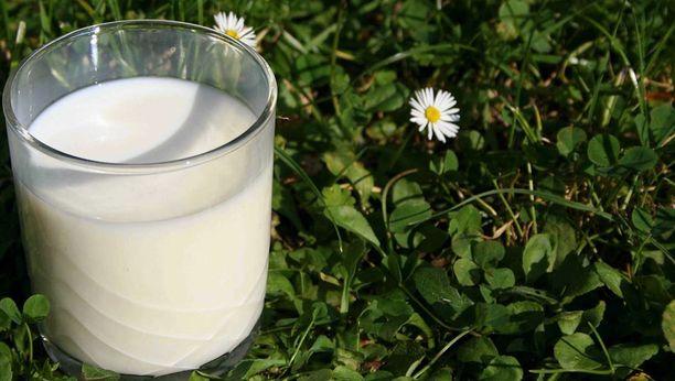 Jos maito unohtuu useaksi tunniksi lämpimään, ei ole mitään hyötyä laittaa sitä enää takaisin kylmään.