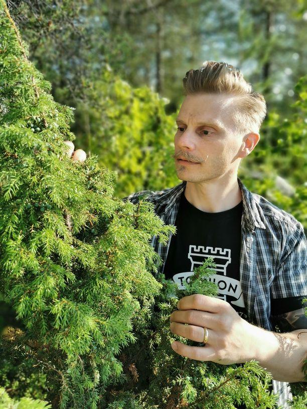 Tornio Distilleryn toimitusjohtaja Kaj Kostiander tutkii vielä raakoja katajanmarjoja.