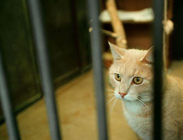 Lempääläinen BoondockŽs Oy hoitaa sopimuksella 11 Pirkanmaan kunnan sekä kaupungin löytöeläimiä. Arkistokuvassa yksi talon entisistä asukkaista.