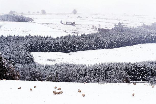 Lumi on peittänyt Britannian nummet ja aiheuttanut lukuisia vaikeuksia.