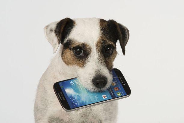 Puhelin saattaa saada helposti haitallisen suuren roolin käyttäjänsä elämässä.