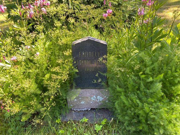 Pikku-Timin haudassa näkyy ajan patina. Lemmikin muisto säilyy, vaikka omistajien huvilaa ei enää ole.
