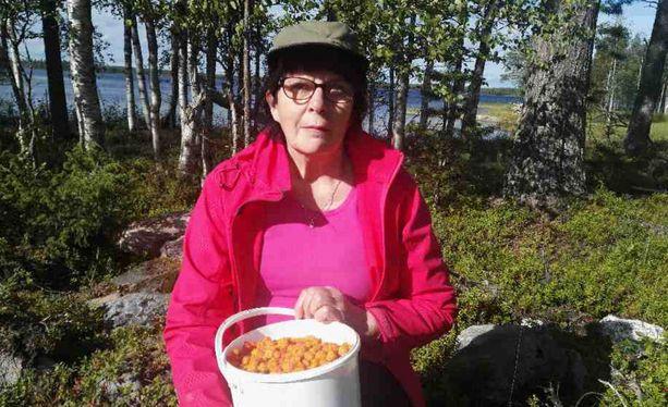Hillanpoimija Eliina Mäntyjärvi keksi lahjoittaa vanhuksille marjaa.