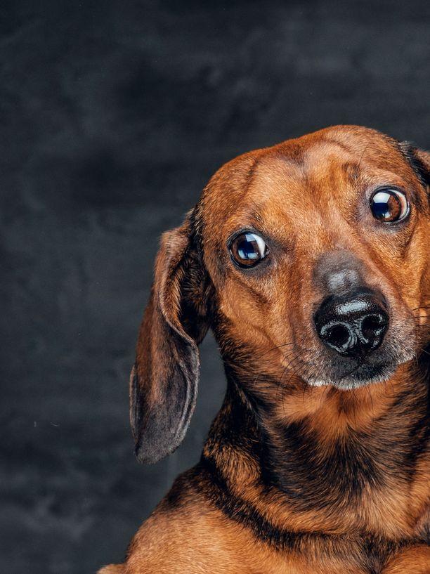 Tutkimuksen mukaan miehen parrassa voi olla enemmän bakteerikuhinaa kuin koiran turkissa.