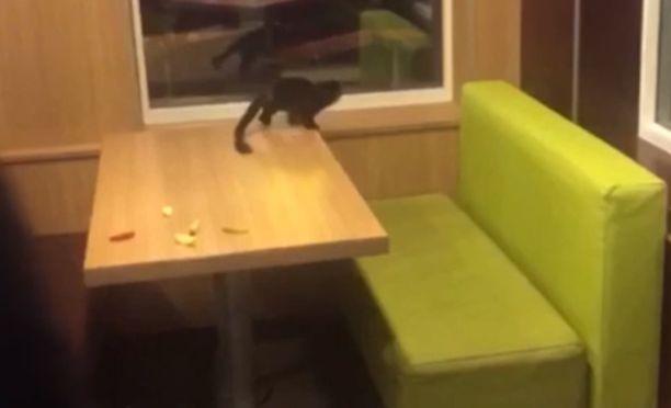 Apina pelkäsi outoja ihmisiä. Tiedossa ei ole, miten se oli joutunut McDonald'siin.