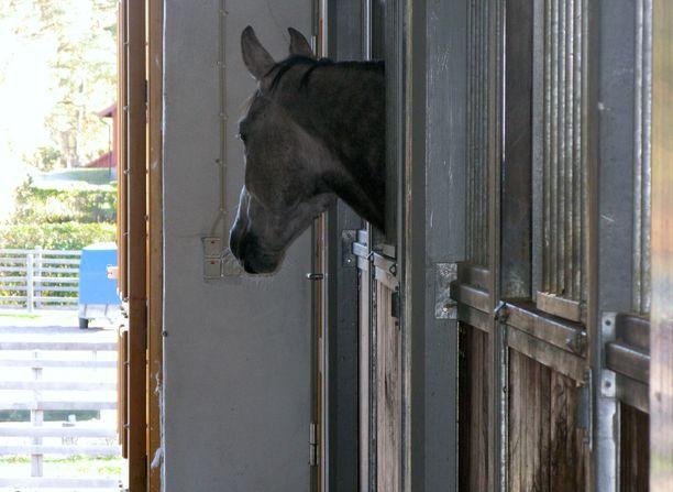 Hevonen on osallisena keskimäärin parissa ihmisen kuolemantapauksessa vuosittain. Kuvituskuva.