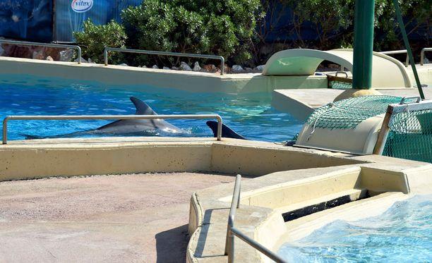 Attican eläinpuisto on suojelujärjestöjen mukaan kohdellut delfiineitä kaltoin.