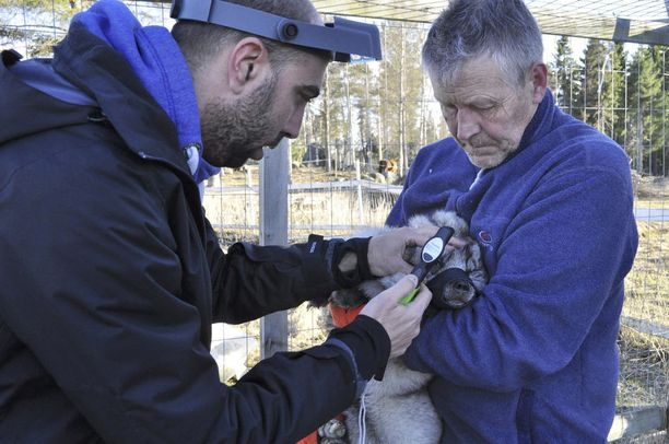 Tarhakettu Utun tutki eläinlääkäri Assaf Wydran. Oikealla kuvassa eläinhoitolan toiminnanjohtaja Markku Harju.