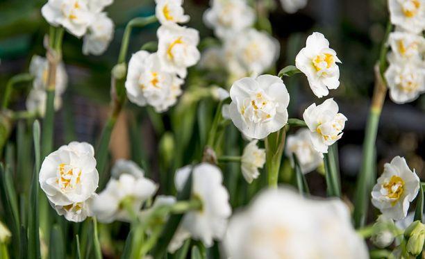 Uuden tutkimuksen mukaan kasvit puhdistavat ilmaa elohopeasta.