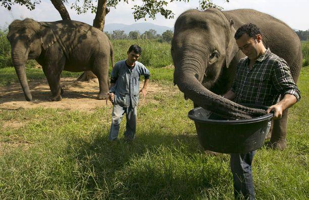 Farmien norsuista pidetään hyvää huolta.