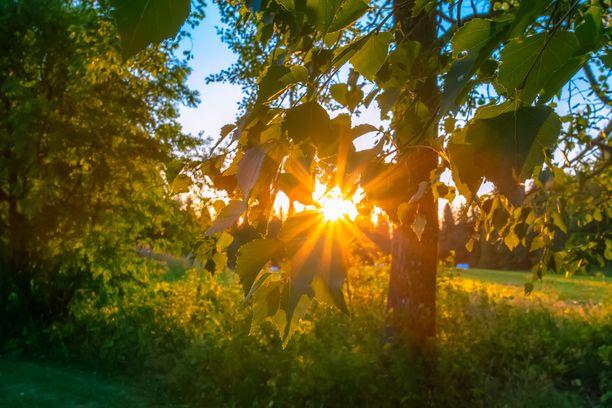 Aurinko laskee Sotkamossa.