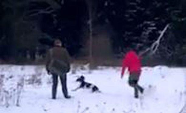 Somessa julkaistu video tyrmistyttää sekä koiranomistajia että ammattikouluttajia.