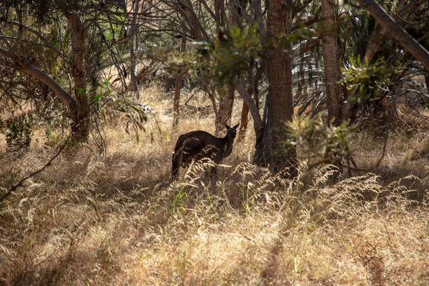 Australiassa pauhaavat metsäpalot ovat tuhonneet monien eläinten elinympäristöt lähes täysin.