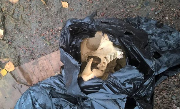 Pariskunta löysi pääkallon muovipussista Helsingin Hietaniemen ranta-alueelta.