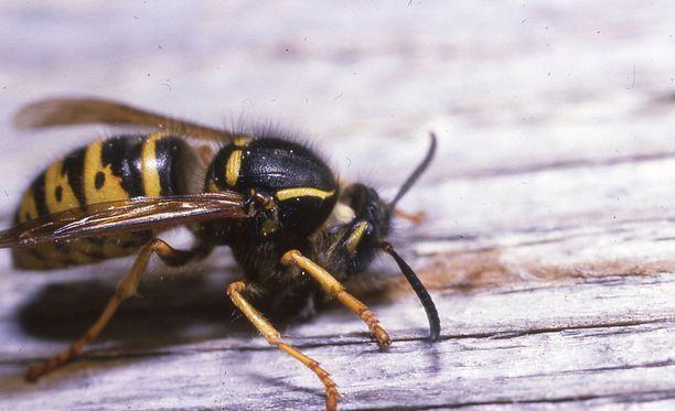Työläisten elämän tarkoitus on yhtäkkiä täysin hävinnyt, kertoo hyönteistutkija Lena Huldén.