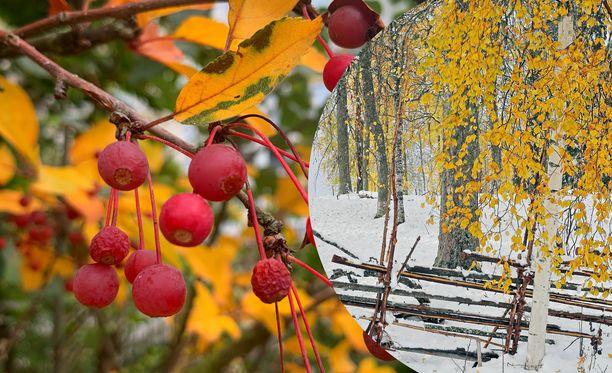 Pääkaupunkiseudun ruska on nyt värikkäimmillään. Pohjois-Karjalassa voitiin viikonloppuna ihailla ruskaa ja ensilunta samaan aikaan.