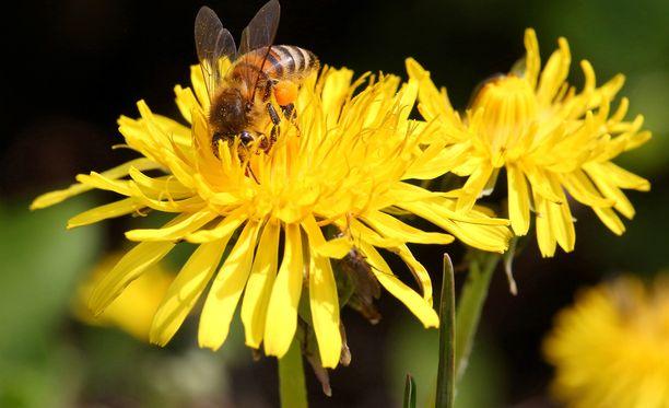 Kukkia ja mehiläisiä on tyypillisesti käytetty kielikuvallisina apuina seksuaalivalistuksessa.