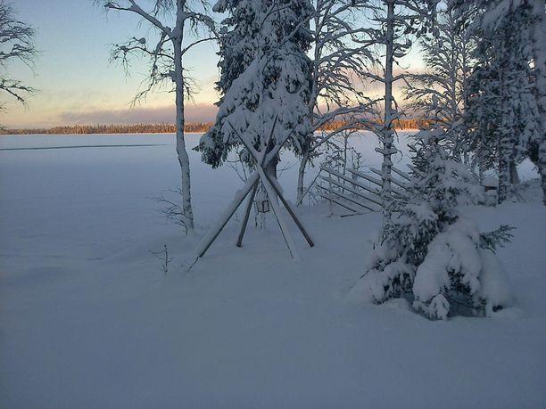 Metsämökin joulu.