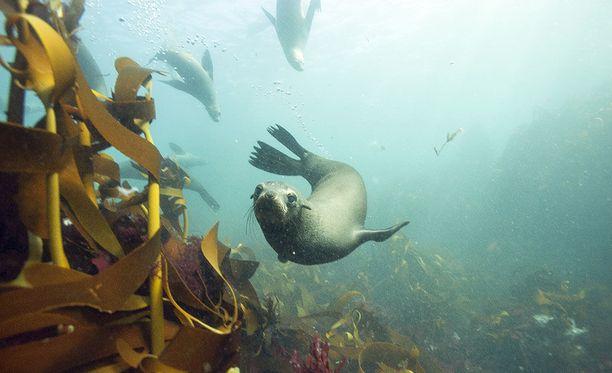 Meren syvyyksissä seikkaillessa törmätään erilaisiin eläimiin.