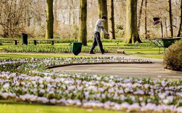 Keukenhofin tulppaanipuutarha työllistää suuren määrän puutarhureita.