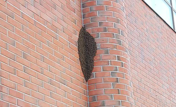Pesässä oli arvion mukaan yli 10 000 mehiläistä.