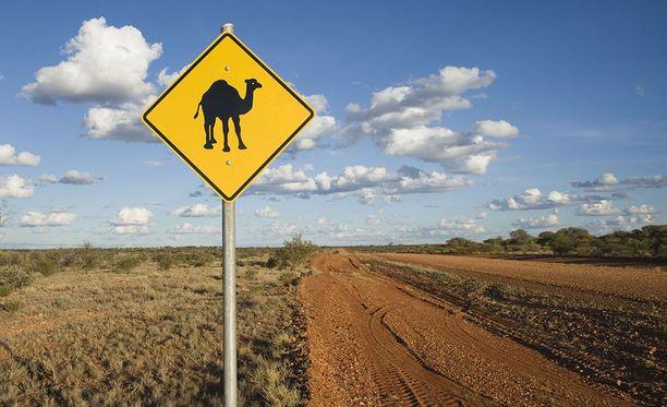 Lähimpään asutukseen oli noin 180 kilometriä, kun Masonin auto kaatui hänen väistäessään villikameleita.