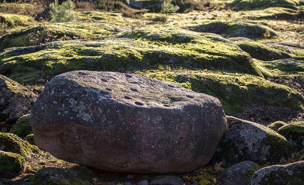 Kuppikivi sijaitsee lähellä Korkeasaaren korkeinta kohtaa.