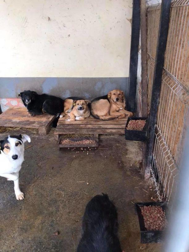 Yhdistys on toimittanut koiratarhalle muun muassa koirankoppeja.