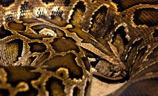 Käärme säikäytti naisen. Mitään ei kuitenkaan sattunut.