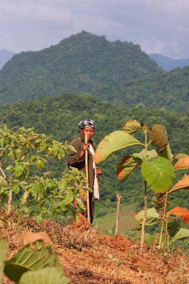 Laosin ylängöillä maailma ei ole juurikaan muuttunut.