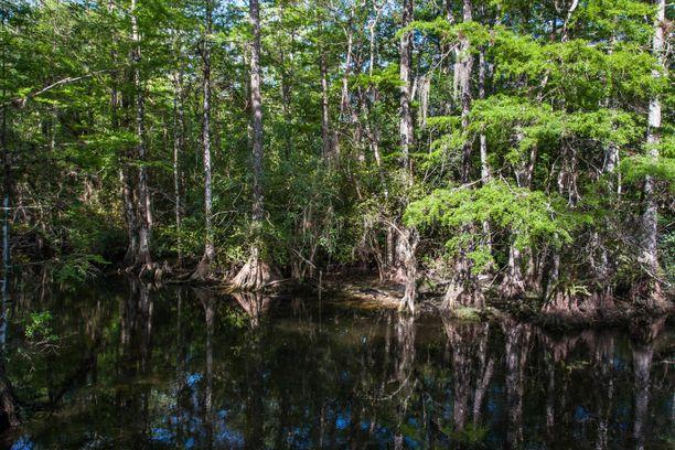 Floridassa ei kannata nyt mennä uimaan järviin tai jokiin.