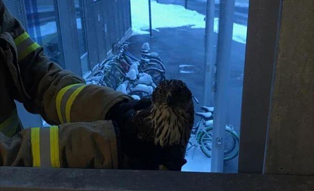 Palomiehet pelastivat pulaan joutuneen linnun.