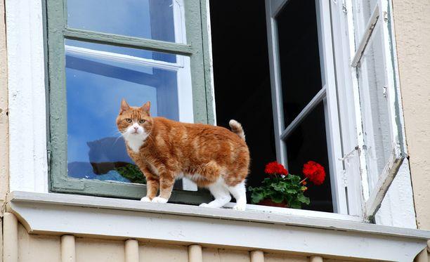 Pieneläinsairaala muistuttaa, että sanonta kissan putoamisesta jaloilleen ei tarkoita, ettei se voisi loukkaantua putoamisessa.