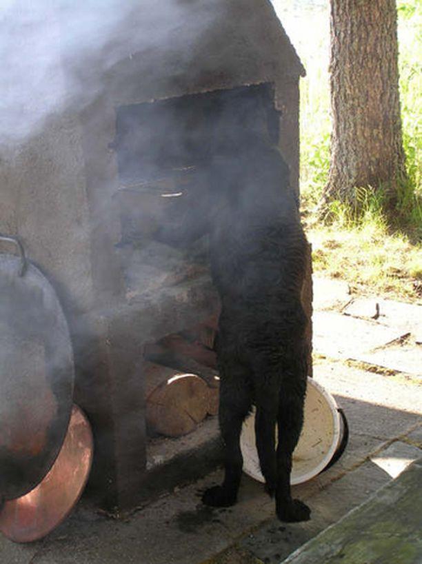 Nokisutari ahkeroi - grilli puhtaaksi.