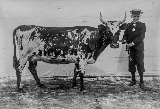 Tunnetun suomalaisen kuvaajan I. K. Inhan lehmäkuvat nousivat nettihitiksi. -Olemme uskoneet näihin kuviin ja tuoneet ne esille Flickr-tilillämme, sanoo Suomen valokuvataiteen museon museonjohtaja Elina Heikka.