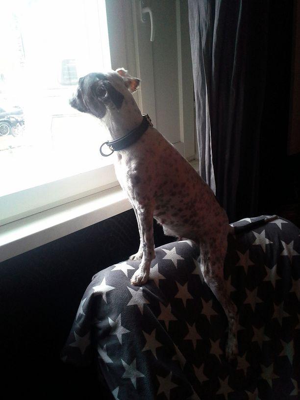 Parivuotias Moppi-koira on vain yksi perheen monista eläimistä.