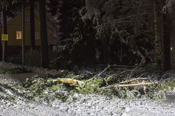 Lumen painosta kaatuneet puut työllistivät pelastuslaitosta Kotkan seudulla. Kuvan puu kaatui Rauhalankadulla Kotkassa.