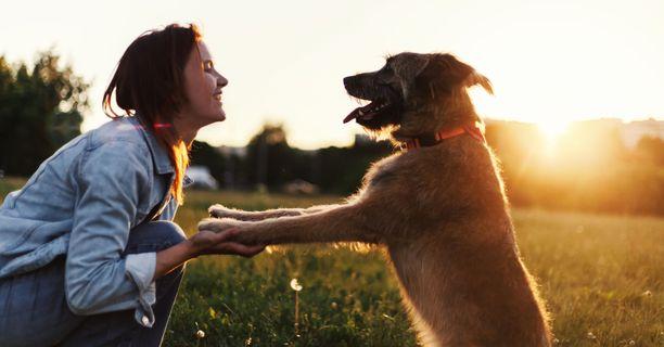 Koiran turkin huuhtelu vähentää lemmikin turkin siitepölymäärää, mutta tutkija ei silti suosittele koiran pesemistä jokaisen lenkin jälkeen.