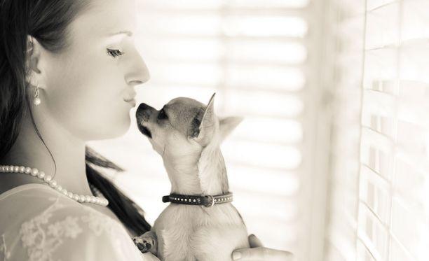 Koira ja ihminen reagoivat ainakin joihinkin asioihin hyvin samankaltaisesti.