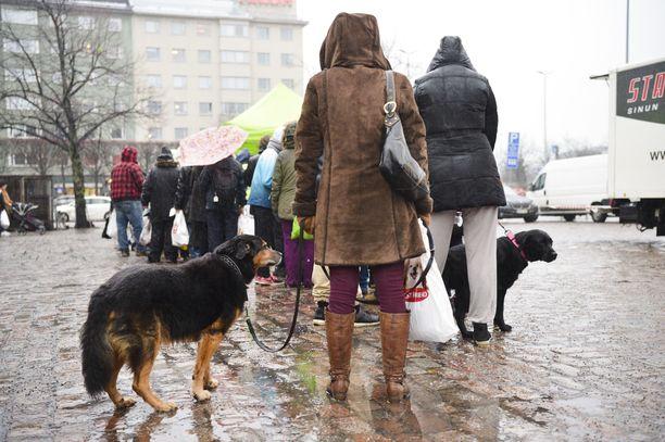 Susanna Harmaala jonottaa Sulo-koiran kanssa.