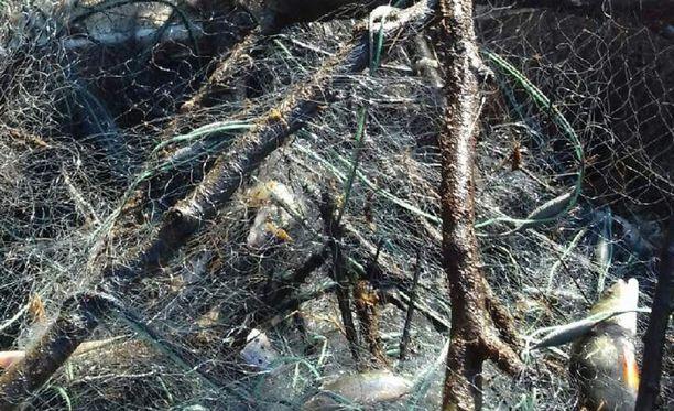 Jäälle ja rannoille jätetyt oksat ovat kulkeutuneet kalastajien verkkoihin Porissa.