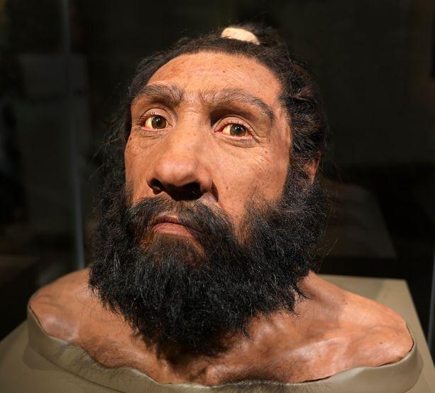 Muotokuva neandertalinihmisestä Yhdysvaltain kansallisessa luonnonhistoriallisessa museossa.