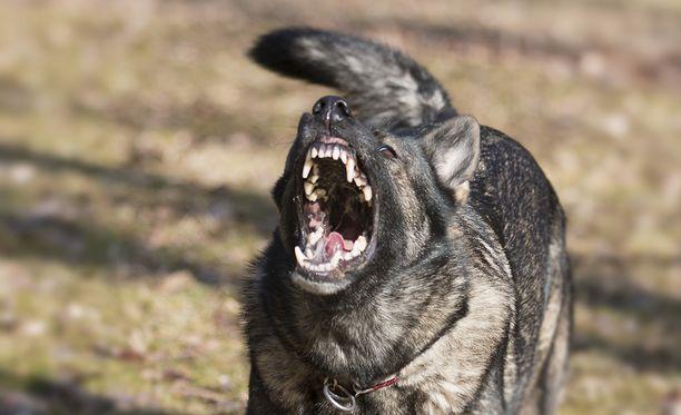 Syyttäjän mukaan hyökkäyksen tehnyt sekarotuinen koira olisi pitänyt varustaa ulkona kuonokopalla.