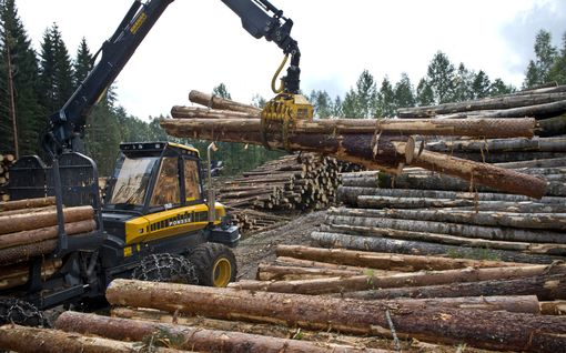"""Meppien huoli heräsi: EU:n metsästrategia uhkaa jopa Suomen hyvinvointivaltiota – """"Tällaista sääntelyä ei pidä tehdä"""""""